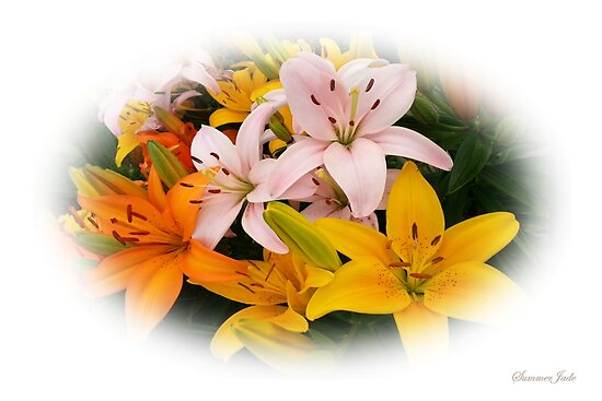 Spring Lilies ~ Ready for Planting by SummerJade