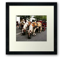 Haflinger Carriage Horses Berlin Framed Print