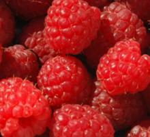 Raspberries in Green Bowl  Sticker