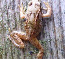 Tiny frog Sticker