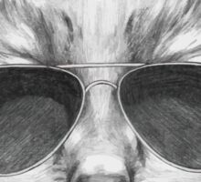 Cat with sunglasses Sticker