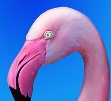 Pink Flamingo Portrait Close Up by BluedarkArt