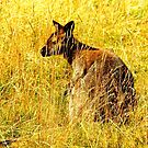 Watcher in the Grass by Barnbk02