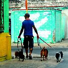 Cozumel Dog Walker by Barnbk02