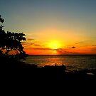Sunset Swim by Barnbk02