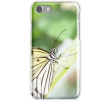 Tree Nymph Butterfly iPhone Case/Skin