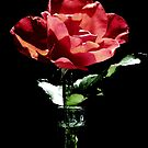 Red, Red Rose by AngieDavies