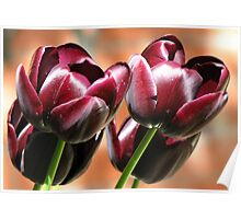 Singing of Spring - Quartet of Tulips Poster