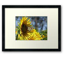 butterfly on a sunflower pt.2 Framed Print