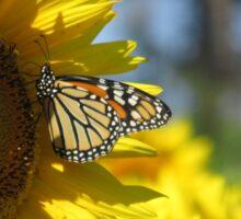butterfly on a sunflower pt.2 Sticker