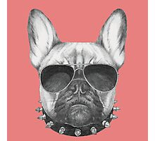 French Bulldog with collar and sunglasses Photographic Print