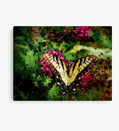 Expired Film Butterfly Canvas Print