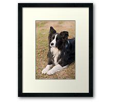 Mans best friend... Framed Print