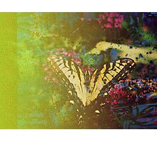 Expired Film Butterfly Double Exposed Photographic Print