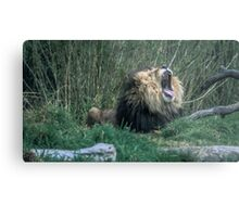 Big Cat, Big Yawn Metal Print