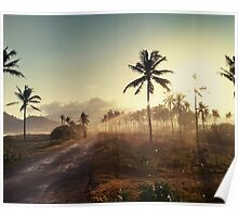 Palms trees Poster