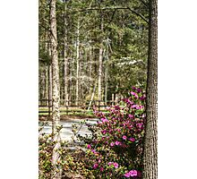 Butterflying to the Azaleas Photographic Print