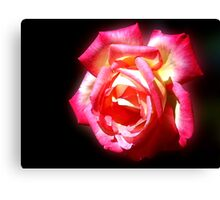 Early Autumn Rose Canvas Print