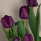 The Beauty of Purple Tulips by Sherry Hallemeier