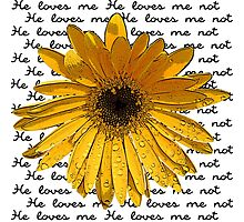 He Loves Me - He Loves Me Not Photographic Print