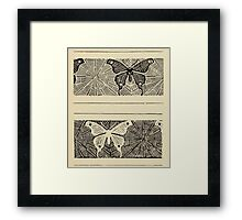 Vintage Butterfuly And Spiderweb  Framed Print
