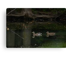 Duck in a pond. Canvas Print