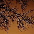 A Peaceful Night  by Bill Colman