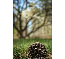 Pinecone Against the Dogwood Photographic Print