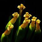 Botanical Choir by artisandelimage