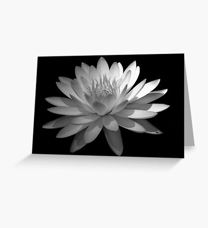 Ebony And Ivory ~ Part Four Greeting Card