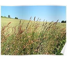 Grasses on the Field II Poster