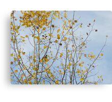 Boreal Chickadee in a Yellow Tree Metal Print