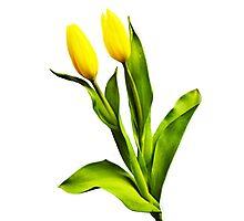 Tulip Twosome Photographic Print