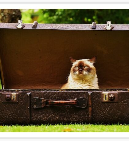 Funny Cat in Suitcase Sticker