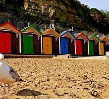 Beach hut beauty. by ScenicViewPics