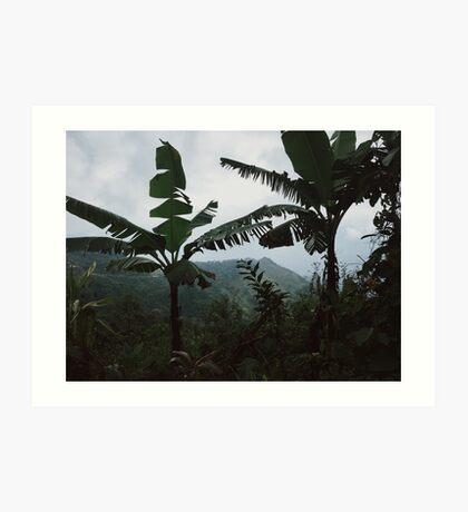 Southern Mexico Jungle Art Print