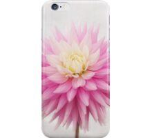 Pastel Pink Dahlia In Full Bloom iPhone Case/Skin