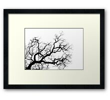 Contorted branch Framed Print