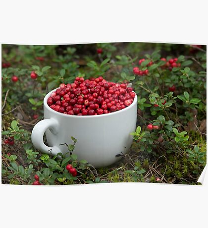 Mug full of Cowberries Poster