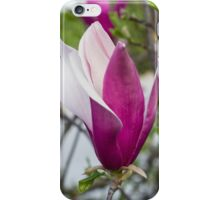 flowering magnolia iPhone Case/Skin