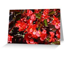 Natural texture with small red flowers Greeting Card