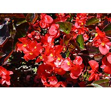 Natural texture with small red flowers Photographic Print