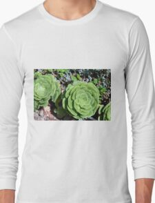 Spherical succulents in the garden Long Sleeve T-Shirt