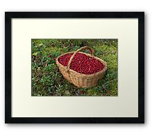 Fresh Cowberries in a Basket in the Forest Framed Print