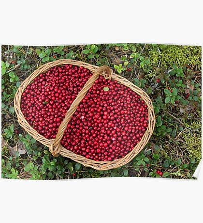 Fresh Cowberries in a Basket in the Forest Poster