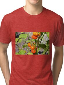 Tomatoes growing in the garden Tri-blend T-Shirt