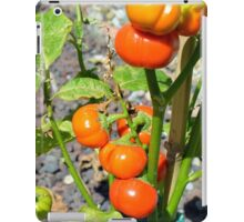 Tomatoes growing in the garden iPad Case/Skin