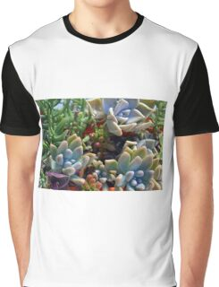 Beautiful succulents in the garden Graphic T-Shirt