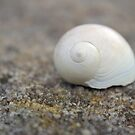 One Little Shell by Cassie Robinson