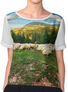 flock of sheep on the meadow near  forest Chiffon Top